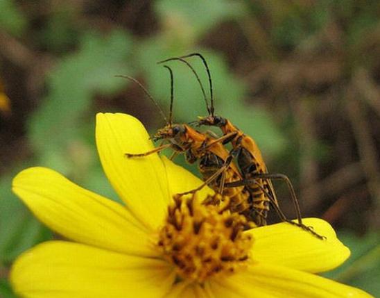 Bug Sex 94
