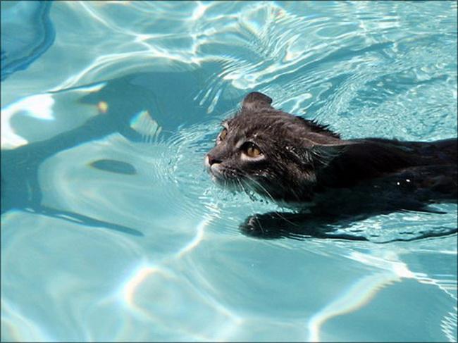 Katzen im wasser for Cute pool pictures