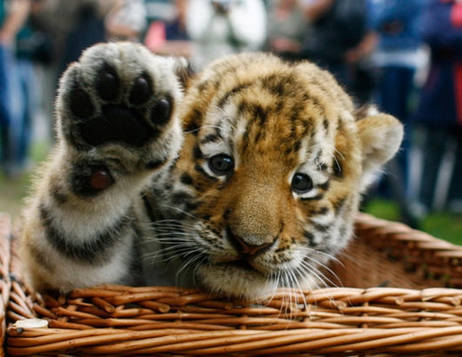 Suesse baby tiere 411