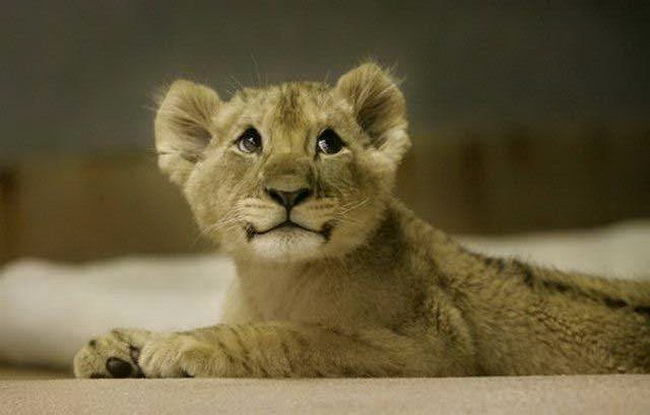 Suesse baby tiere 18