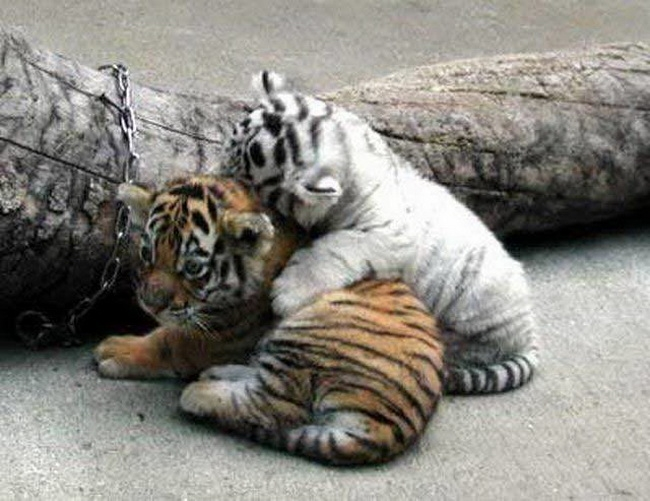 Suesse baby tiere 21