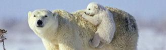 Tiere und ihre Babys