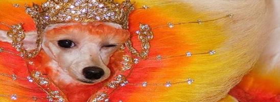 Farbenfrohe Hunde
