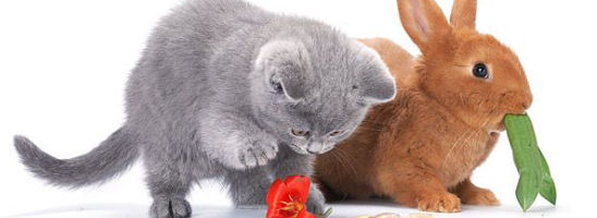 Sweet Rabbit and Kitty
