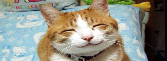 Smiling Cat | Picdump #4 by Dopemaus
